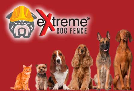 https://www.extremedogfence.com