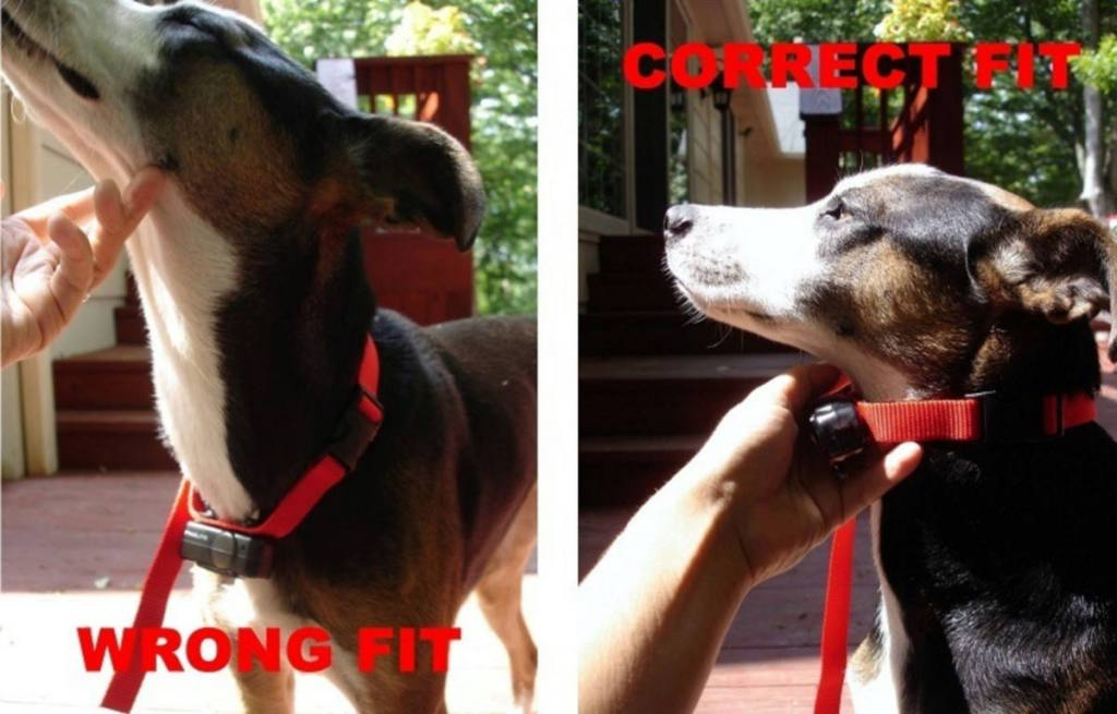 2 Replacement Prongs for Underground Dog Fence Collar For SHORT HAIR Dogs NEW