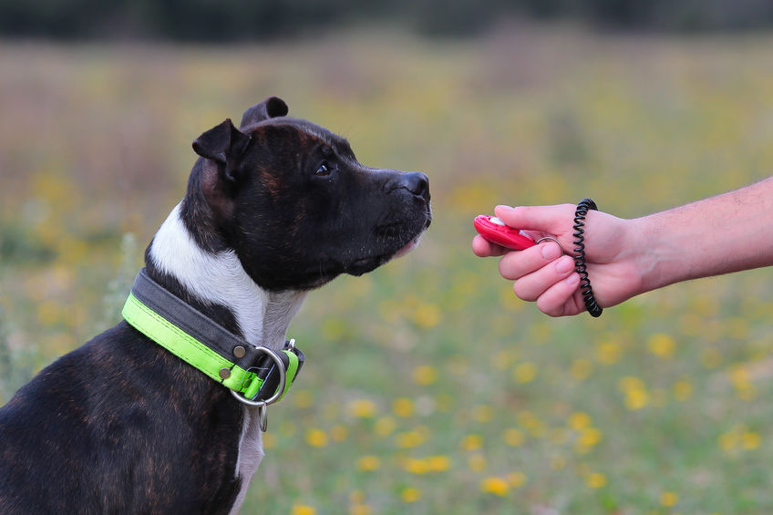 How To Use A Dog Clicker Extreme Electric Dog Fence 2019