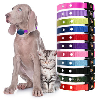 Collar Straps for dogs